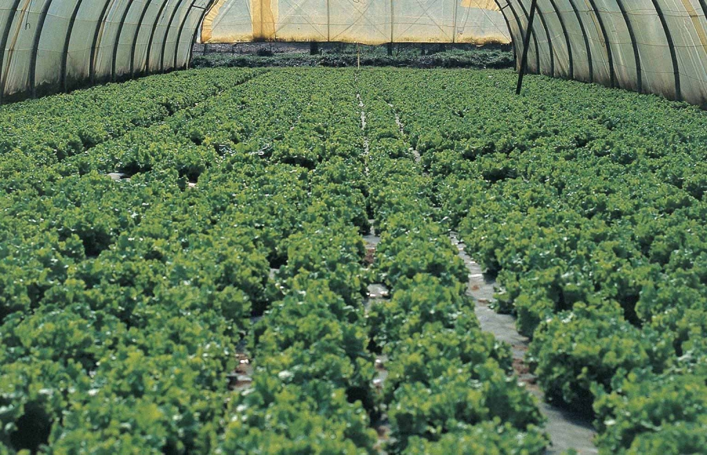 trazabilidad-agricultura